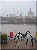 Lost-Spider-Thames