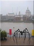 Lost-Spider-Thames